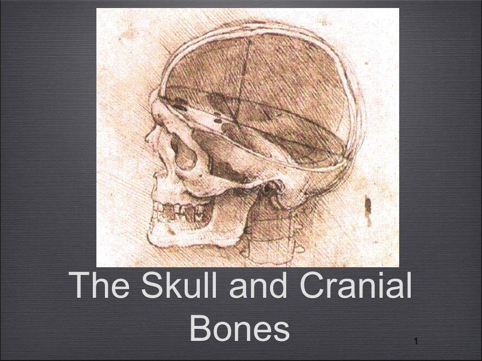 11 The Skull and Cranial Bones
