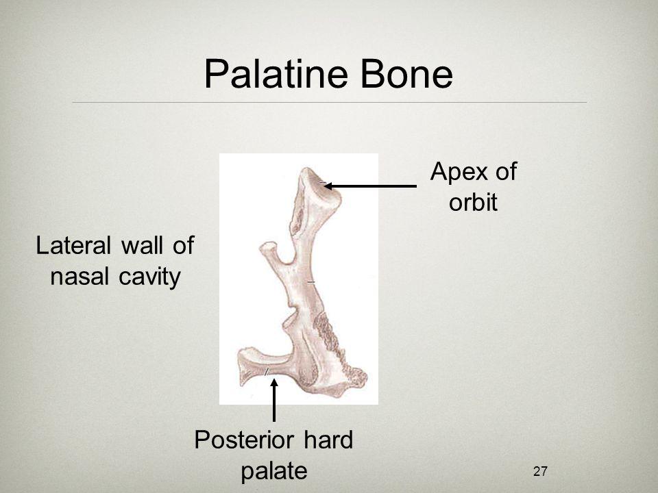 27 Palatine Bone Lateral wall of nasal cavity Apex of orbit Posterior hard palate