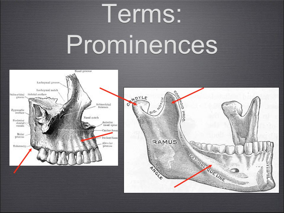 Terms: Prominences