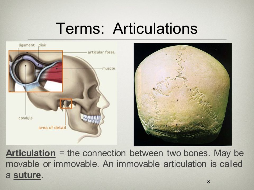 8 Terms: Articulations Articulation = the connection between two bones. May be movable or immovable. An immovable articulation is called a suture.
