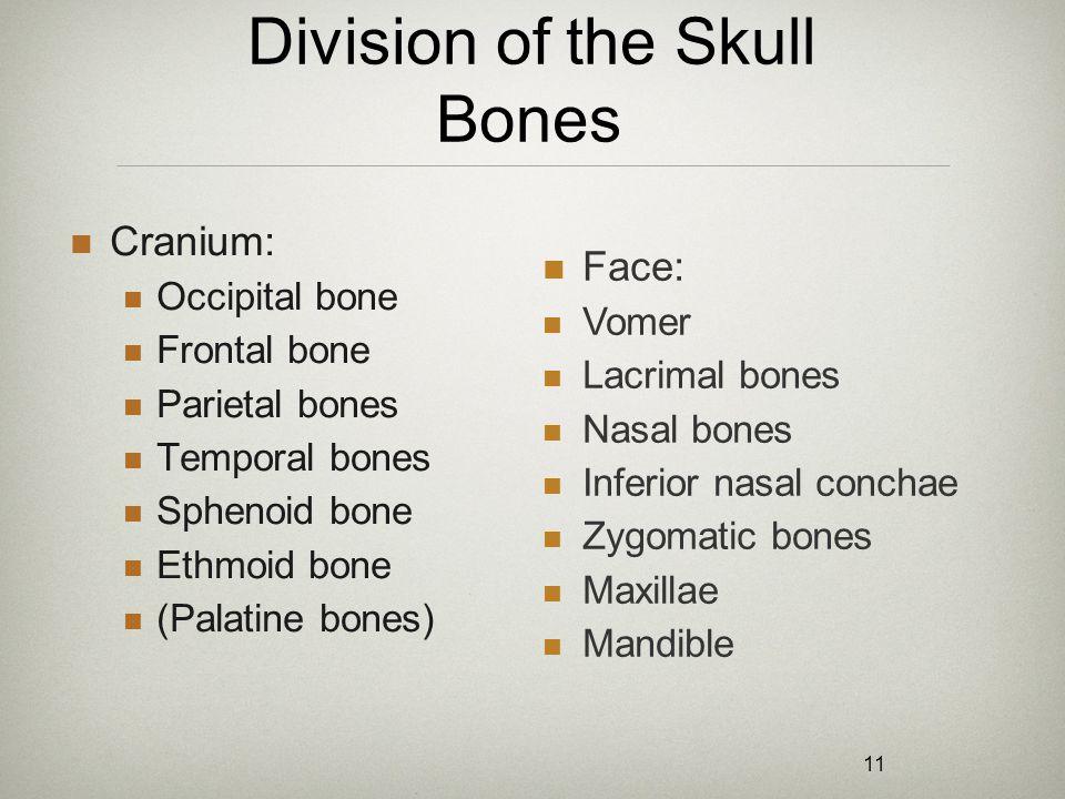 11 Division of the Skull Bones Cranium: Occipital bone Frontal bone Parietal bones Temporal bones Sphenoid bone Ethmoid bone (Palatine bones) Face: Vo