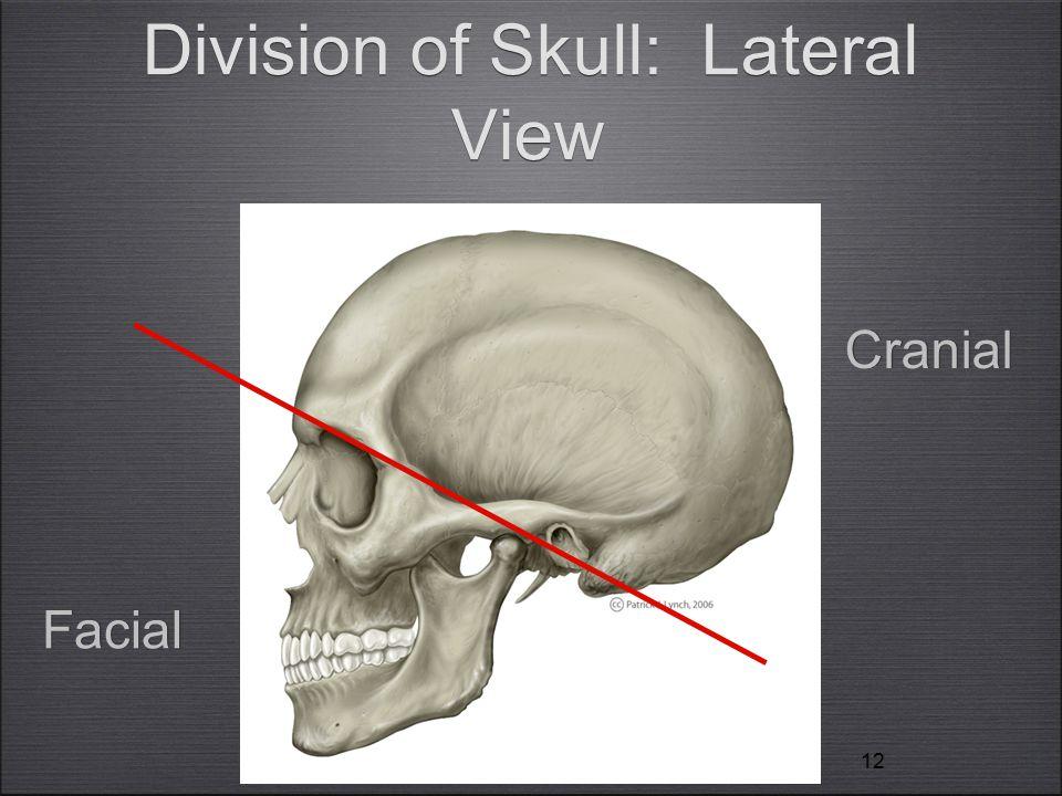 12 Division of Skull: Lateral View Facial Cranial