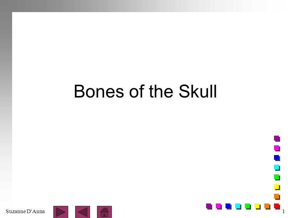 Suzanne D Anna2 Sutures immovable joints found only between bones of the skull n coronal - found between the frontal and the two parietal bones n sagittal - between the two parietal bones n lambdoid - between the parietal and occipital bones n squamous - between the parietal and the temporal bones