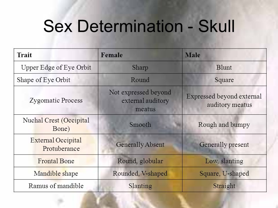 Sex Determination - Skull TraitFemaleMale Upper Edge of Eye OrbitSharpBlunt Shape of Eye OrbitRoundSquare Zygomatic Process Not expressed beyond external auditory meatus Expressed beyond external auditory meatus Nuchal Crest (Occipital Bone) SmoothRough and bumpy External Occipital Protuberance Generally AbsentGenerally present Frontal BoneRound, globularLow, slanting Mandible shapeRounded, V-shapedSquare, U-shaped Ramus of mandibleSlantingStraight