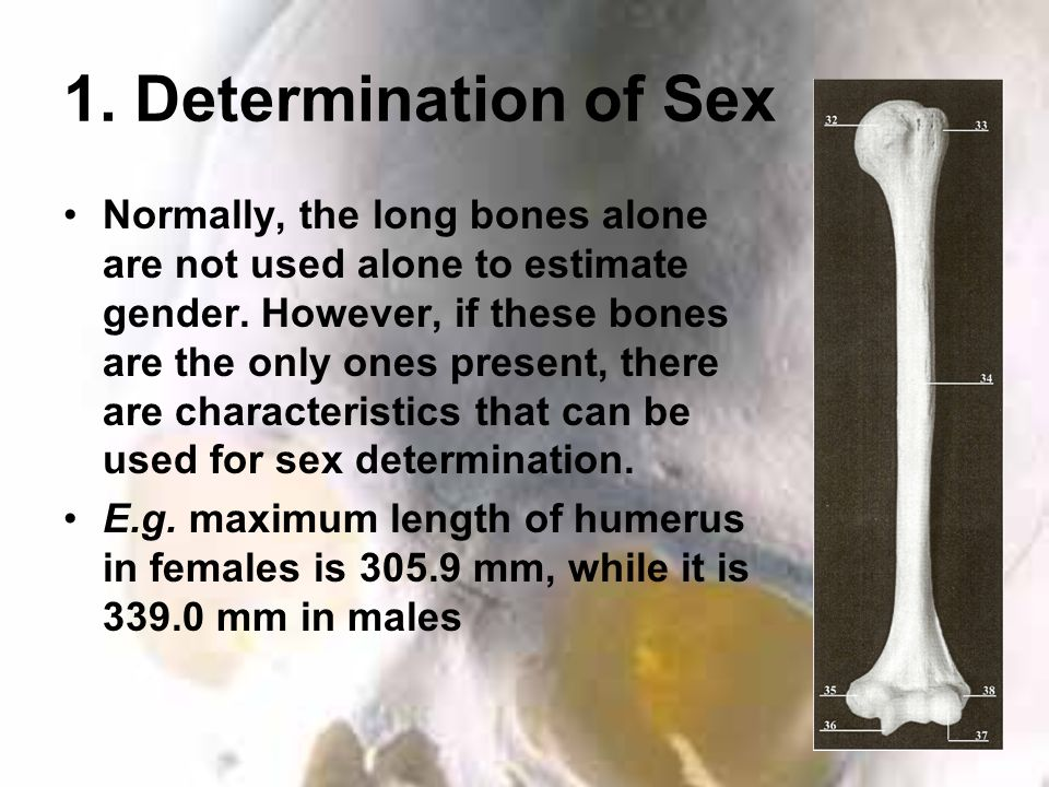 1. Determination of Sex Normally, the long bones alone are not used alone to estimate gender.