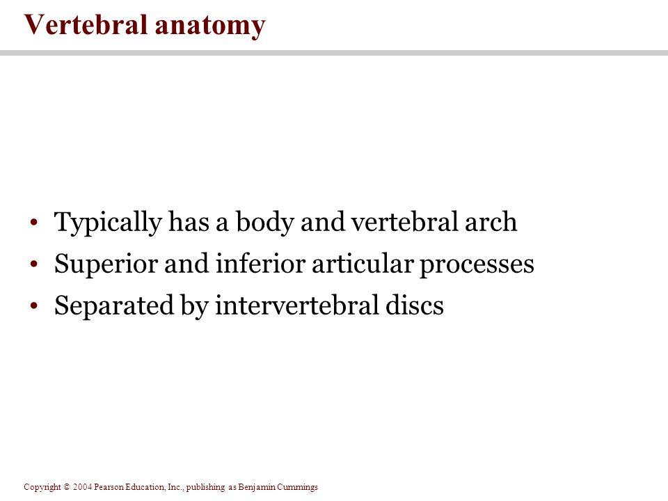Copyright © 2004 Pearson Education, Inc., publishing as Benjamin Cummings Figure 7.18 Vertebral Anatomy Figure 7.18