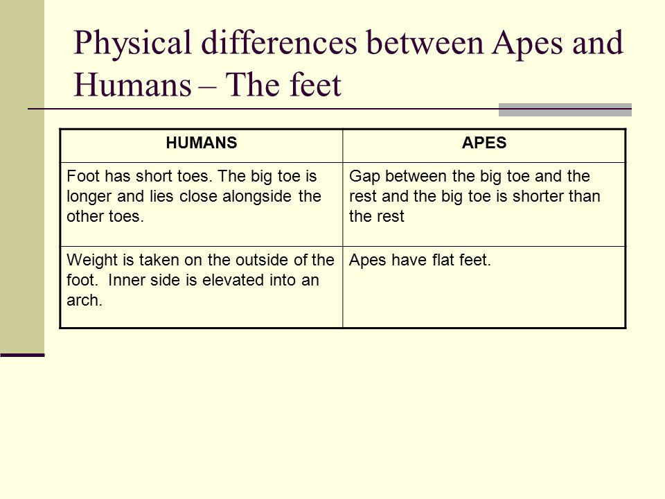 Physical differences between Apes and Humans – The feet HUMANSAPES Foot has short toes.