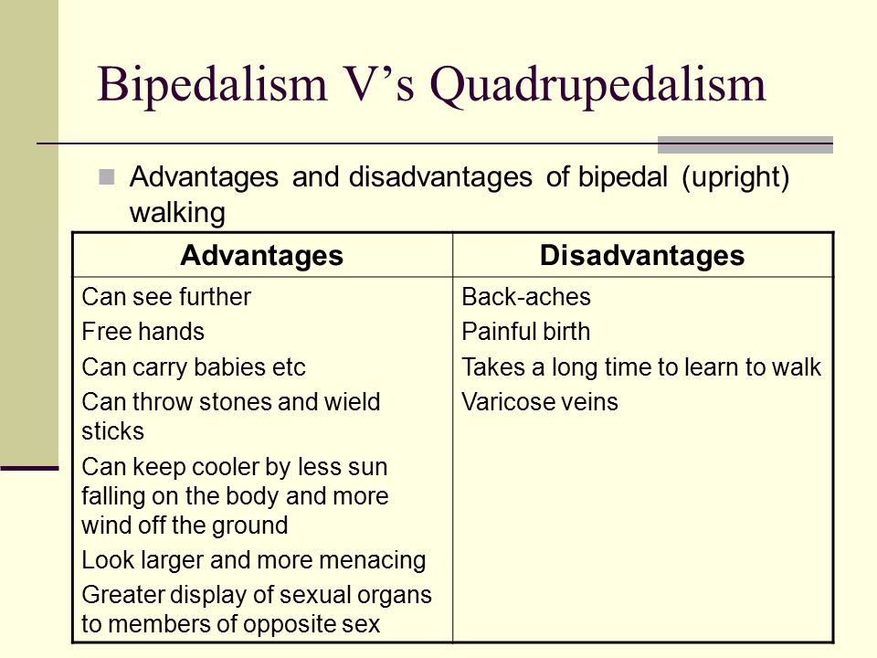 Bipedalism V's Quadrupedalism Advantages and disadvantages of bipedal (upright) walking AdvantagesDisadvantages Can see further Free hands Can carry babies etc Can throw stones and wield sticks Can keep cooler by less sun falling on the body and more wind off the ground Look larger and more menacing Greater display of sexual organs to members of opposite sex Back-aches Painful birth Takes a long time to learn to walk Varicose veins