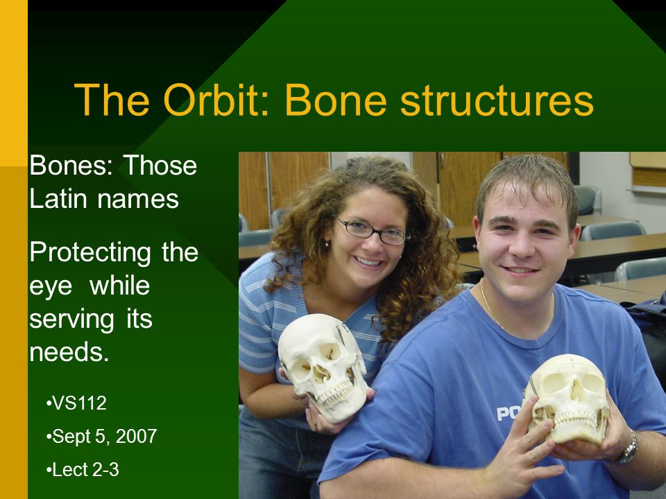 The Orbit: Bone structures Bones: Those Latin names Protecting the eye while serving its needs.