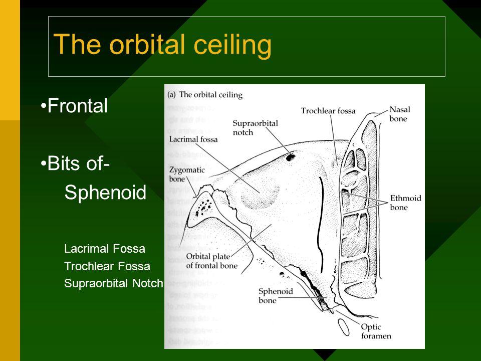 The orbital ceiling Frontal Bits of- Sphenoid Lacrimal Fossa Trochlear Fossa Supraorbital Notch