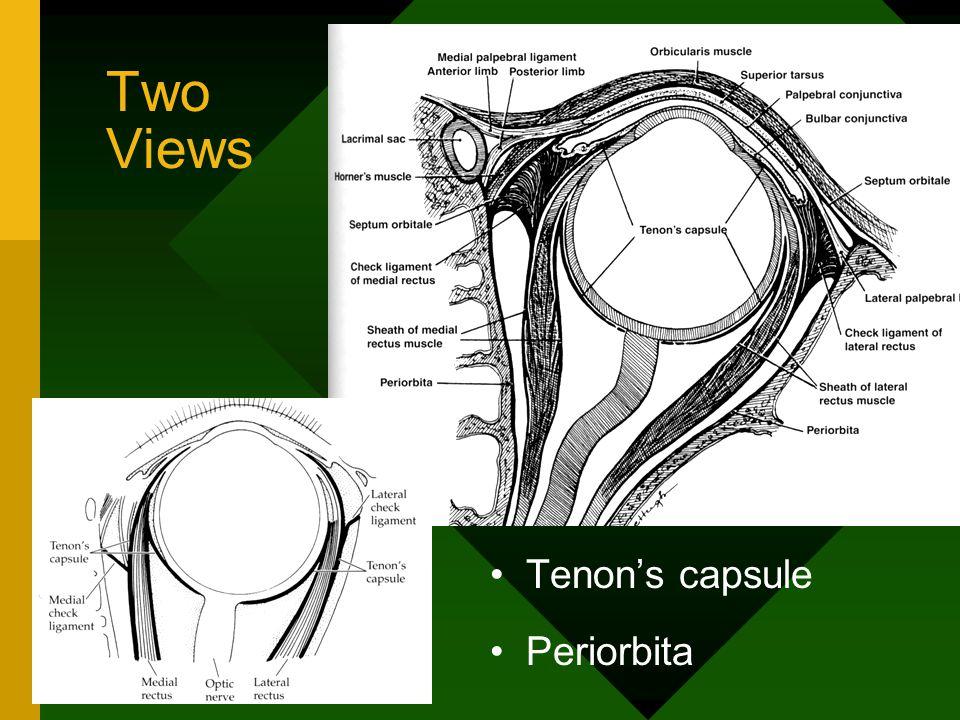Two Views Tenon's capsule Periorbita