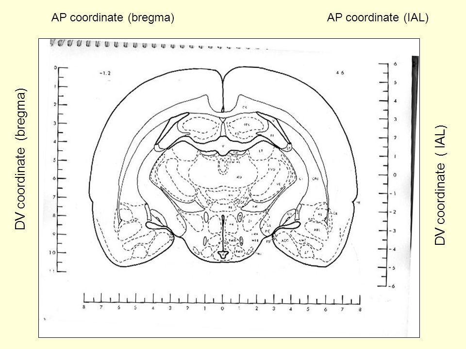 AP coordinate (bregma)AP coordinate (IAL) DV coordinate (bregma) DV coordinate ( IAL)