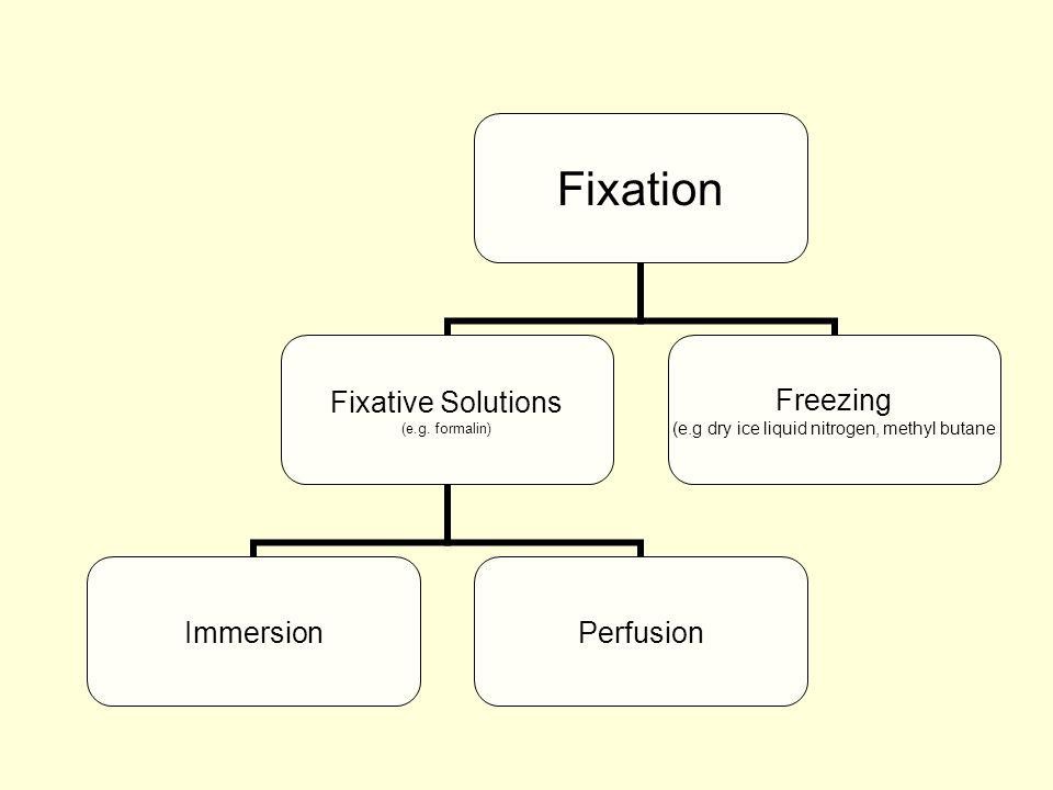 Fixation Fixative Solutions (e.g. formalin) ImmersionPerfusion Freezing (e.g dry ice liquid nitrogen, methyl butane