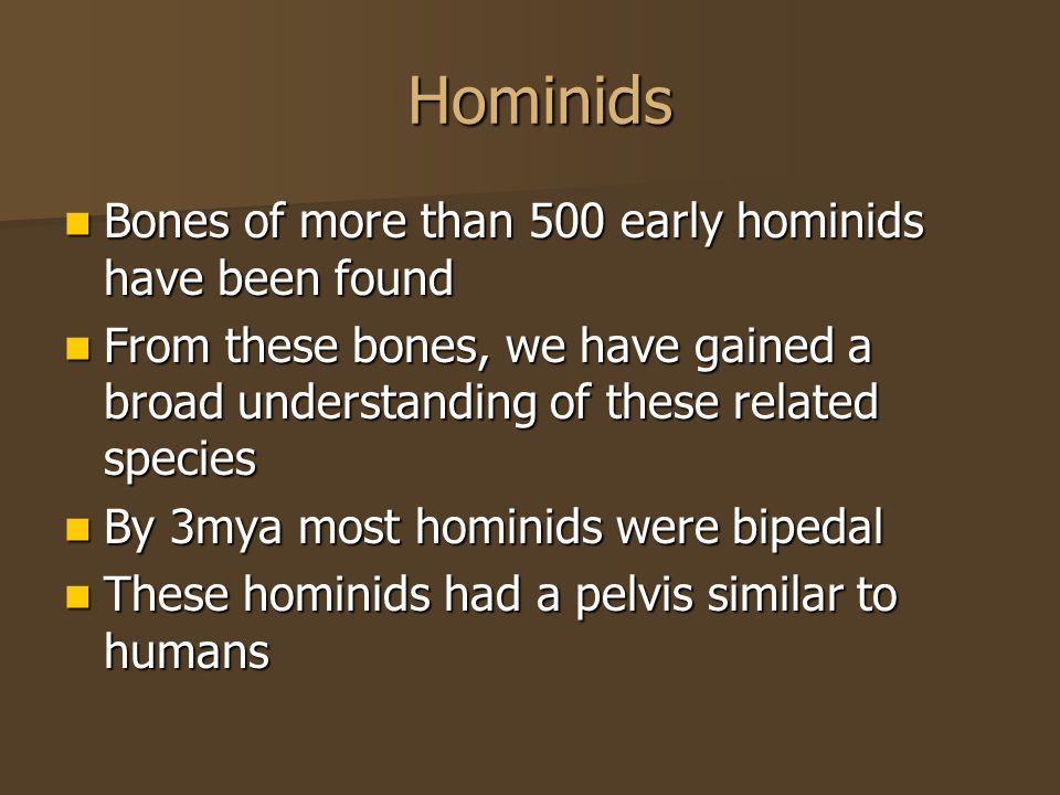 Hominids Hominids Bones of more than 500 early hominids have been found Bones of more than 500 early hominids have been found From these bones, we hav