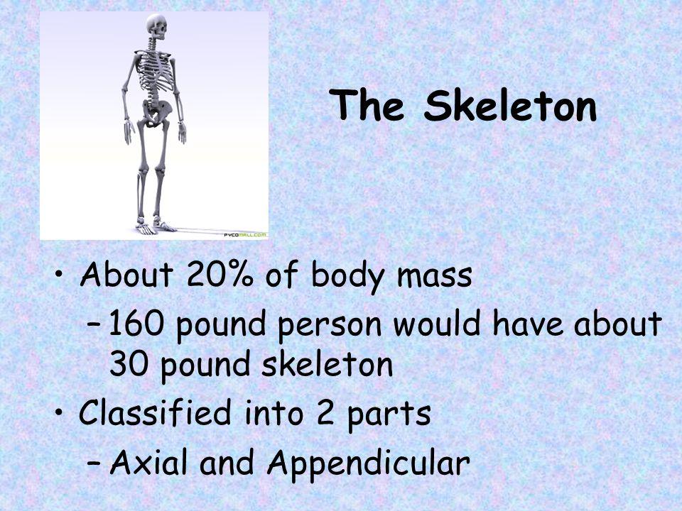 Human Skull, Inferior View Slide 5.24 Copyright © 2003 Pearson Education, Inc.