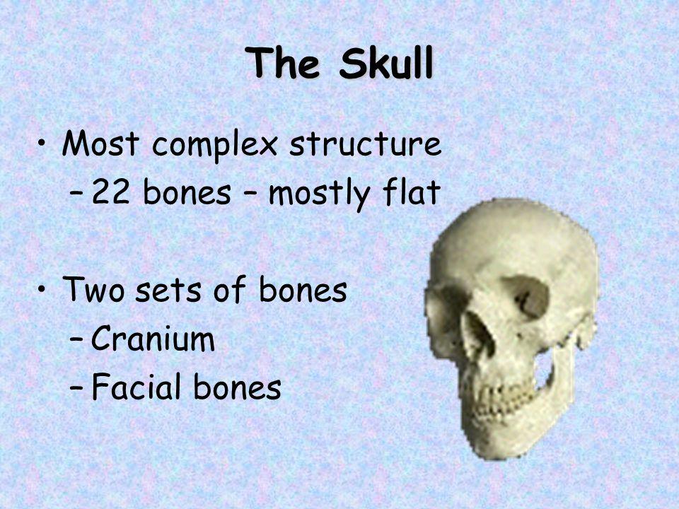 The Skull Most complex structure –22 bones – mostly flat Two sets of bones –Cranium –Facial bones