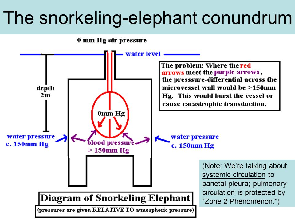 The snorkeling-elephant conundrum (Note: We're talking about systemic circulation to parietal pleura; pulmonary circulation is protected by Zone 2 Phenomenon. )