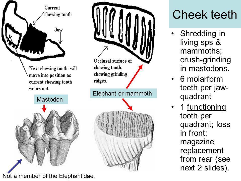 Cheek teeth Shredding in living sps & mammoths; crush-grinding in mastodons.