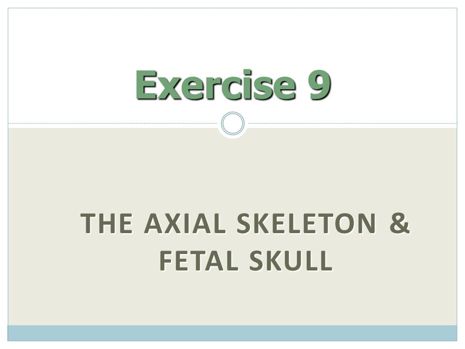 THE AXIAL SKELETON & FETAL SKULL Exercise 9