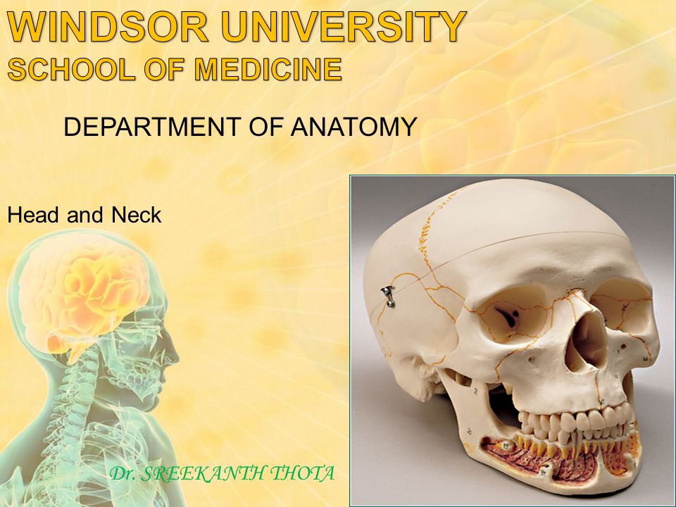 Head and Neck Dr. SREEKANTH THOTA DEPARTMENT OF ANATOMY