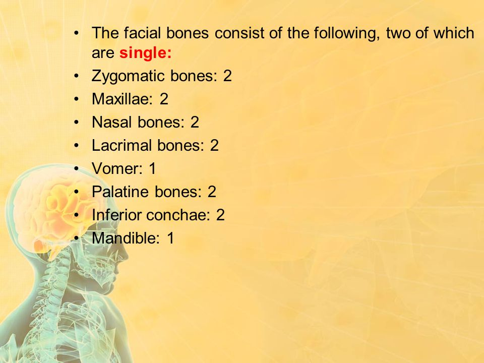 The facial bones consist of the following, two of which are single: Zygomatic bones: 2 Maxillae: 2 Nasal bones: 2 Lacrimal bones: 2 Vomer: 1 Palatine