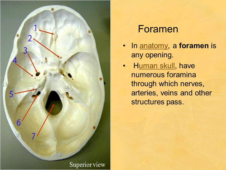 Foramen In anatomy, a foramen is any opening.anatomy Human skull, have numerous foramina through which nerves, arteries, veins and other structures pa
