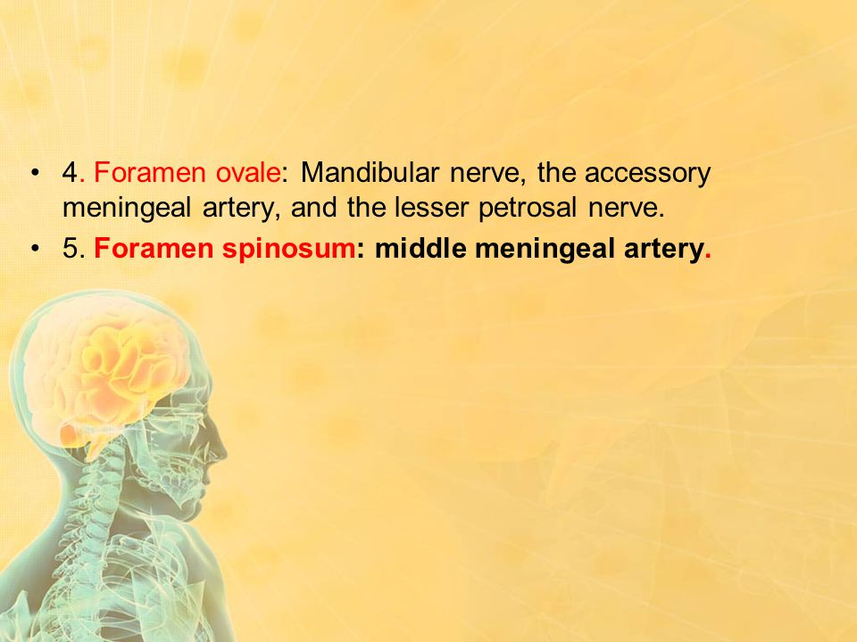 4. Foramen ovale: Mandibular nerve, the accessory meningeal artery, and the lesser petrosal nerve. 5. Foramen spinosum: middle meningeal artery.