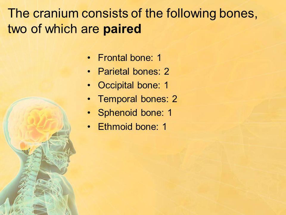 The cranium consists of the following bones, two of which are paired Frontal bone: 1 Parietal bones: 2 Occipital bone: 1 Temporal bones: 2 Sphenoid bo