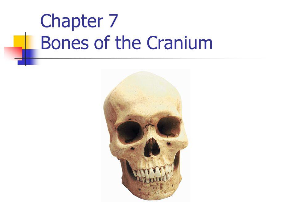 Facial bones Lacrimal bone 2 bones Forms outer part of the eye socket Ethmoid bone forms the inner part of the eye socket.