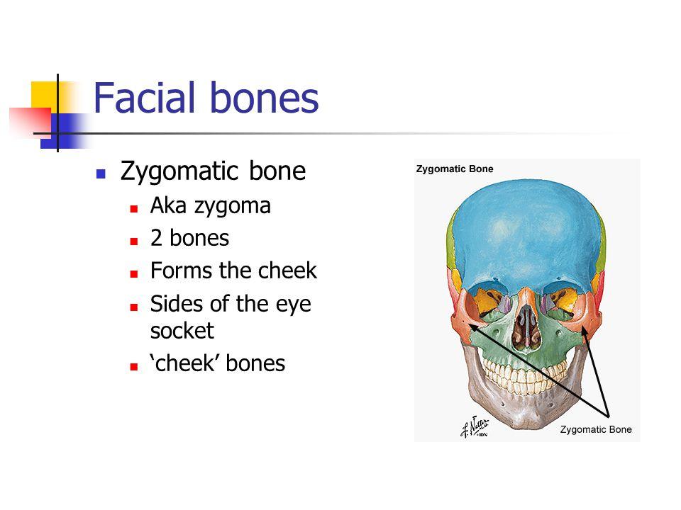 Facial bones Zygomatic bone Aka zygoma 2 bones Forms the cheek Sides of the eye socket 'cheek' bones