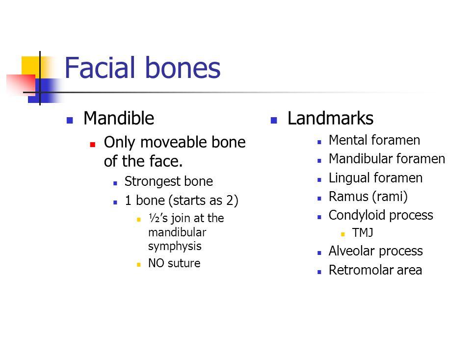 Mandible Only moveable bone of the face. Strongest bone 1 bone (starts as 2) ½'s join at the mandibular symphysis NO suture Landmarks Mental foramen M