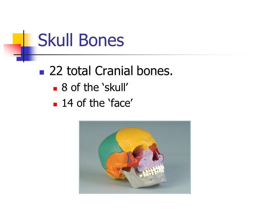 Skull Bones 22 total Cranial bones. 8 of the 'skull' 14 of the 'face'