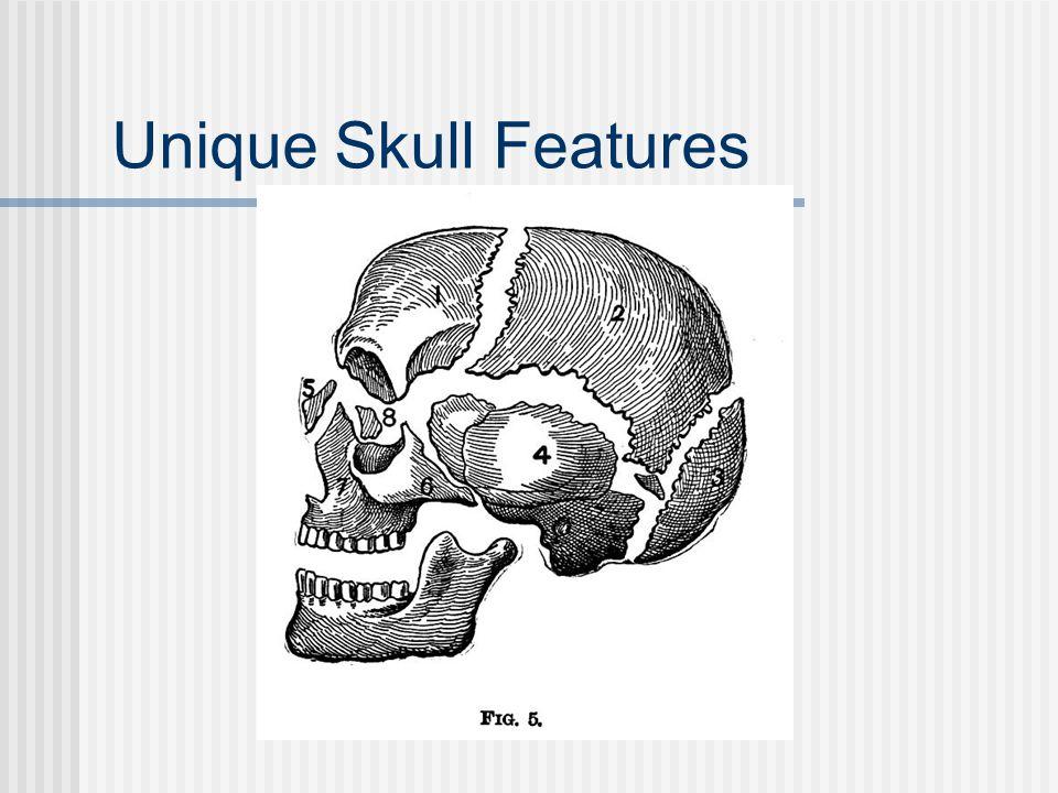 Unique Skull Features
