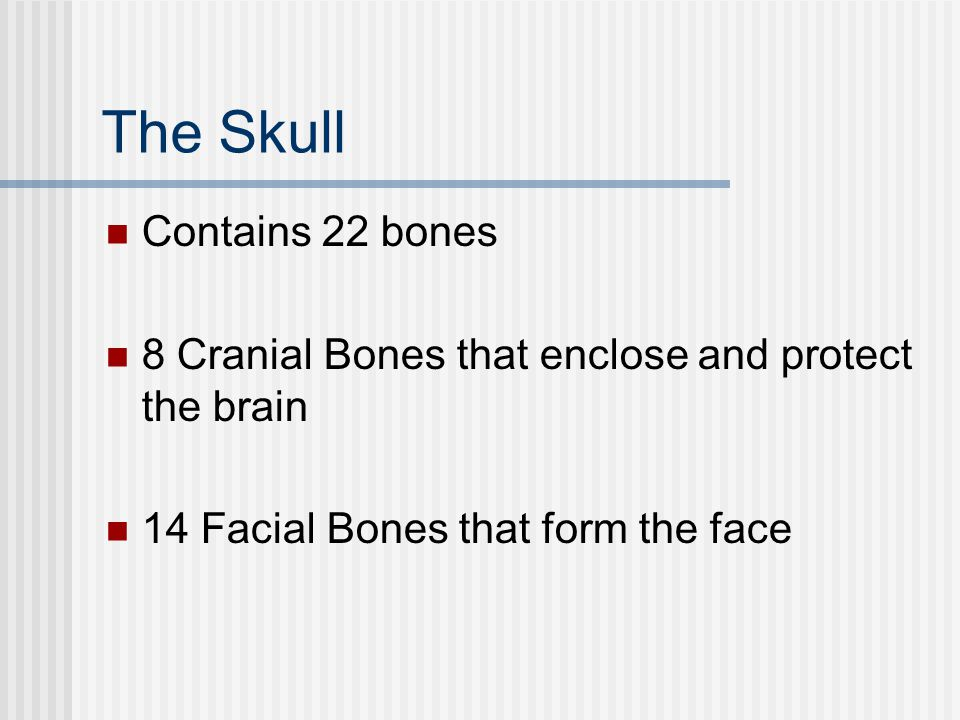 The Skull Contains 22 bones 8 Cranial Bones that enclose and protect the brain 14 Facial Bones that form the face