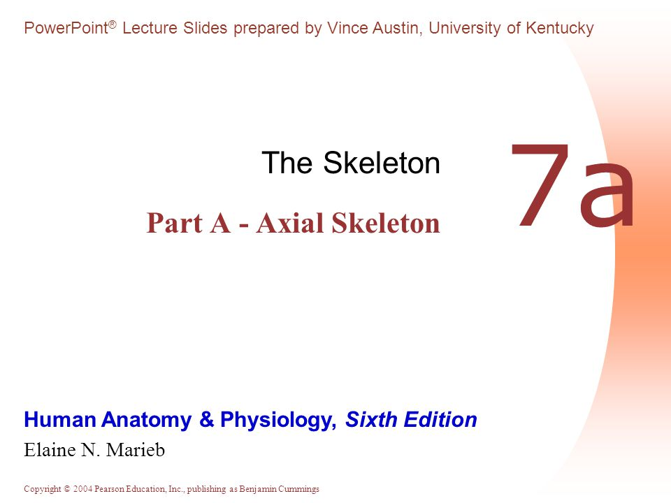 Copyright © 2004 Pearson Education, Inc., publishing as Benjamin Cummings Zygomatic Bones  Zygomatic bones - Irregularly shaped bones (cheekbones) that form the prominences of the cheeks and the inferolateral margins of the orbits