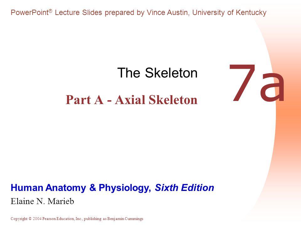 Copyright © 2004 Pearson Education, Inc., publishing as Benjamin Cummings The Axial Skeleton Eighty bones segregated into three regions  Skull  Vertebral column  Bony thorax
