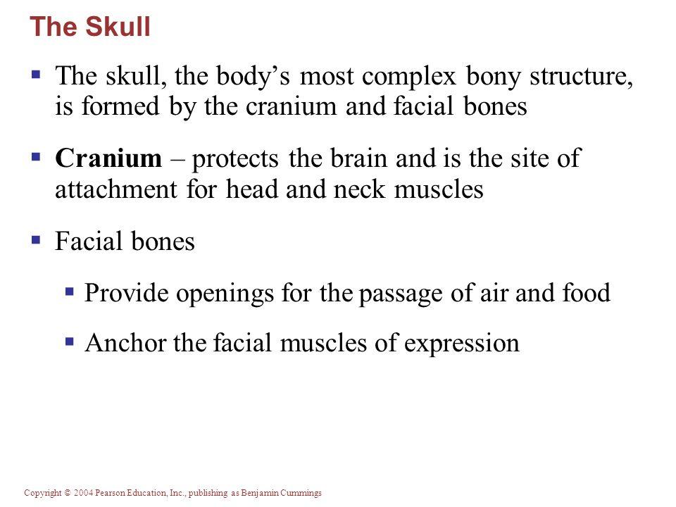 Copyright © 2004 Pearson Education, Inc., publishing as Benjamin Cummings Cervical Vertebrae Table 7.2