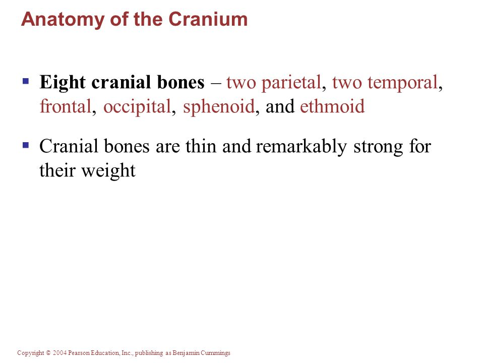 Copyright © 2004 Pearson Education, Inc., publishing as Benjamin Cummings Anterior Aspects of the Skull Figure 7.2a