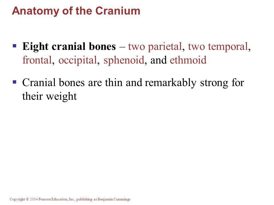 Copyright © 2004 Pearson Education, Inc., publishing as Benjamin Cummings Clavicles (Collarbones) Figure 7.22b, c
