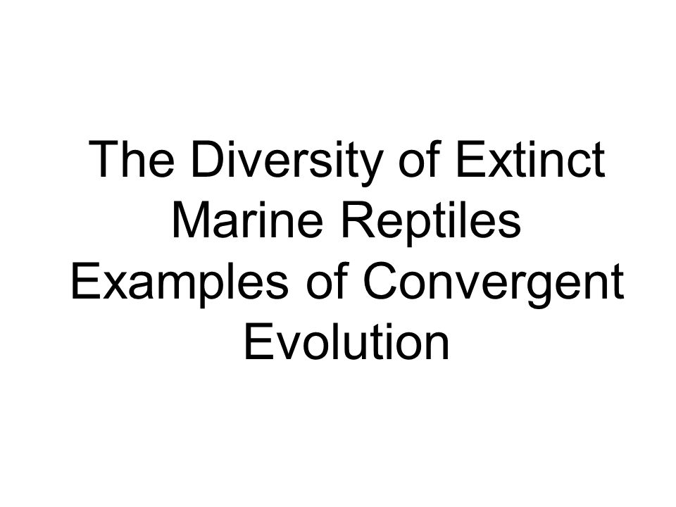 The Diversity of Extinct Marine Reptiles Examples of Convergent Evolution