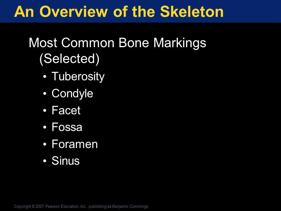 The Axial Division: The Skull Bones of the Face (continued) Nasal bones Lacrimal bones Copyright © 2007 Pearson Education, Inc., publishing as Benjamin Cummings