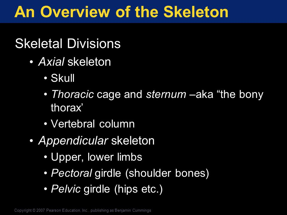 An Overview of the Skeleton The Skeleton Figure 6-8(a) Please memorize the names of these bones and be able to identify them on a diagram.