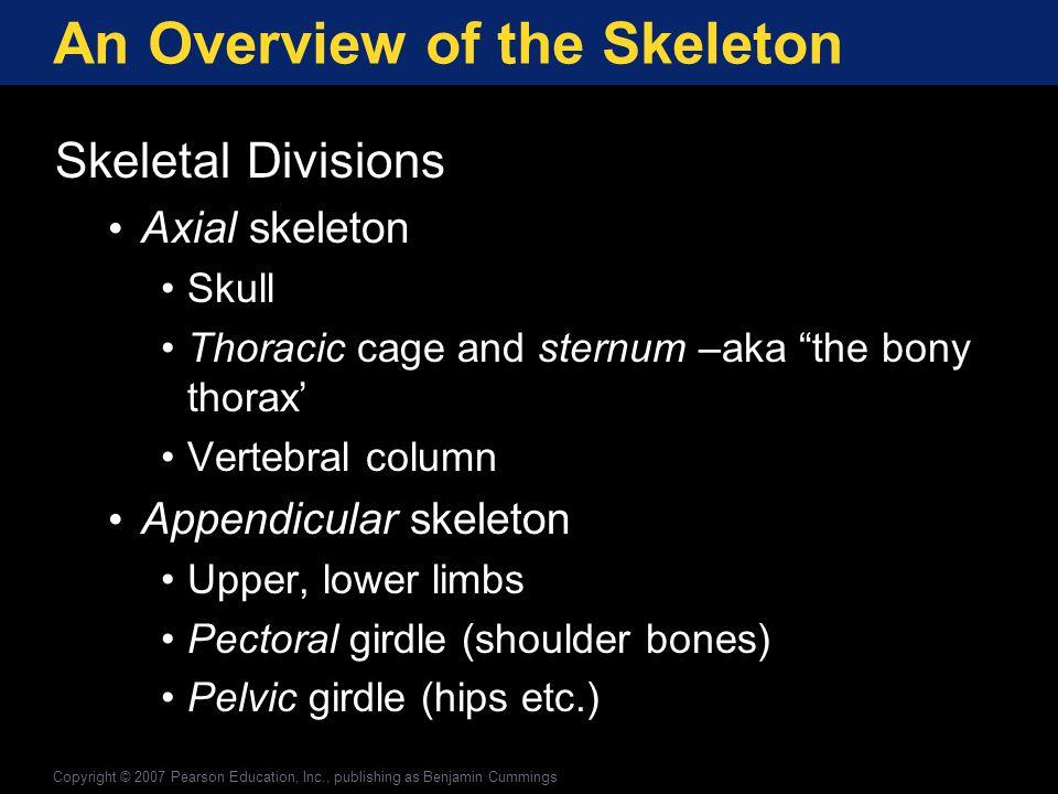 Appendicular Division The Femur Figure 6-28 * * * * * * * *