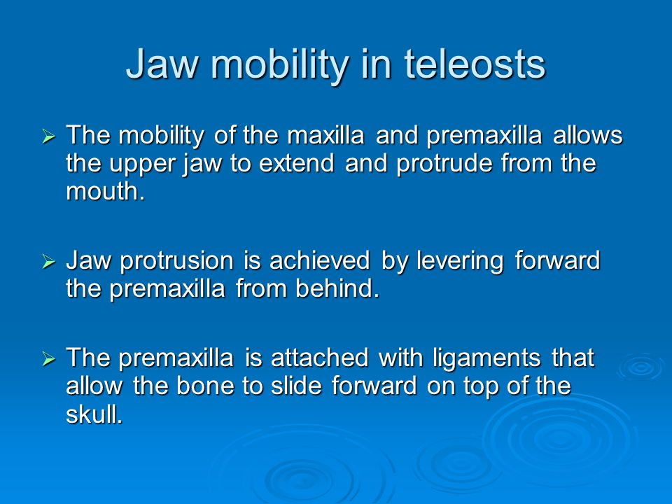 Jaw mobility in teleosts  The mobility of the maxilla and premaxilla allows the upper jaw to extend and protrude from the mouth.