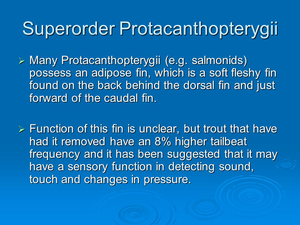 Superorder Protacanthopterygii  Many Protacanthopterygii (e.g. salmonids) possess an adipose fin, which is a soft fleshy fin found on the back behind