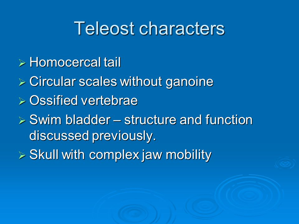 Teleost characters  Homocercal tail  Circular scales without ganoine  Ossified vertebrae  Swim bladder – structure and function discussed previously.