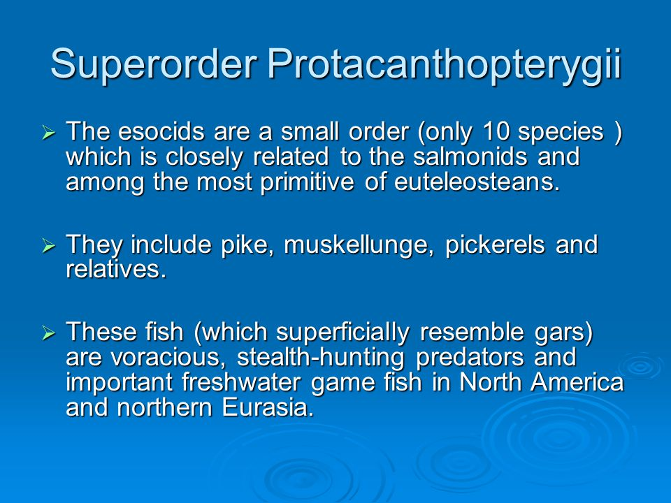 Superorder Protacanthopterygii  The esocids are a small order (only 10 species ) which is closely related to the salmonids and among the most primitive of euteleosteans.