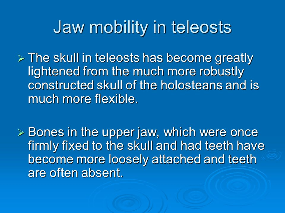 Jaw mobility in teleosts  The skull in teleosts has become greatly lightened from the much more robustly constructed skull of the holosteans and is much more flexible.