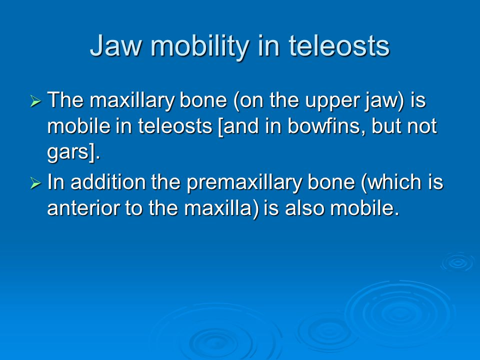 Jaw mobility in teleosts  The maxillary bone (on the upper jaw) is mobile in teleosts [and in bowfins, but not gars].