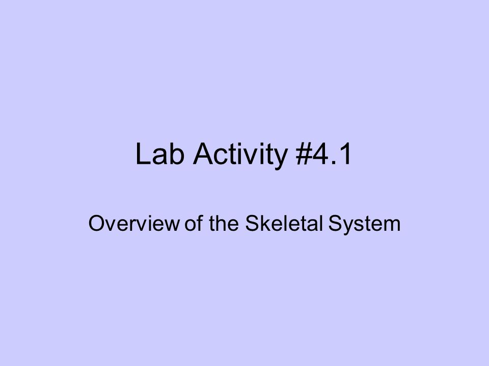 Lab Activity #4.1 Overview of the Skeletal System